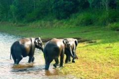 elephant-thekkady