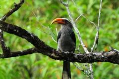 vezhambal-bird-thekkady-kerala-wood-note