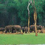 periyar-wildlife-thekkady