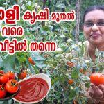 Thakkali krishi Malayalam videos