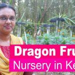 Dragon Fruit Nursery in Kerala
